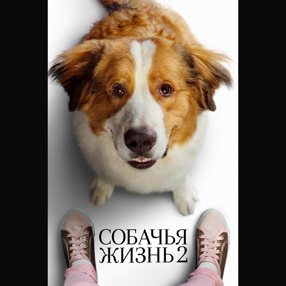 Собачья жизнь 2 (A Dog's Journey) — цитаты из фильма